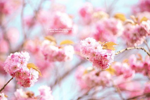 不管有多少面墙阻挡,总还有一道属于你的明媚阳光 (2)