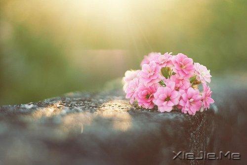 人生有多残酷,你就该有多坚强 (1)