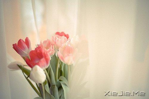 活得平和,才能在心里装下满满的幸福 (1)