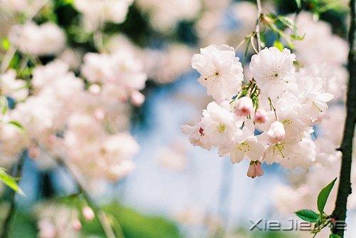 活得平和,才能在心里装下满满的幸福 (4)