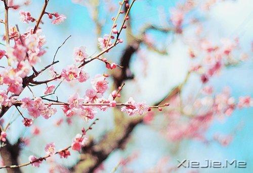 活得平和,才能在心里装下满满的幸福 (7)