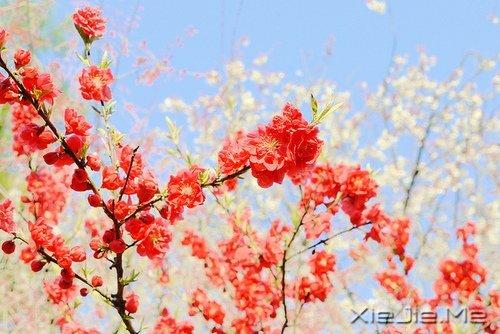 活得平和,才能在心里装下满满的幸福 (9)
