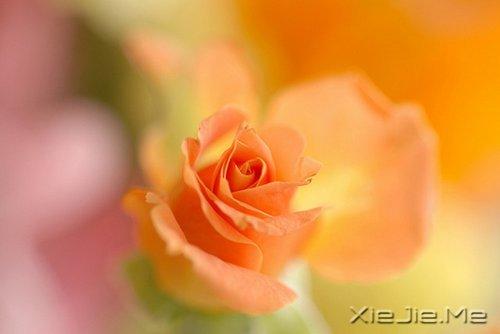 活得平和,才能在心里装下满满的幸福 (10)