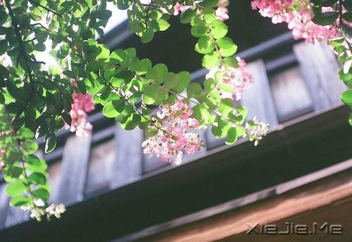 早安心语:你的心很小,不要装下太多忧伤 (2)