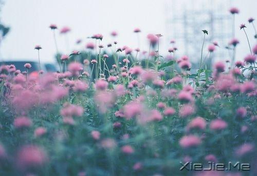 早安心语:你的心很小,不要装下太多忧伤 (9)